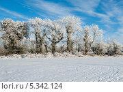 Купить «Заиндевевшие деревья на фоне голубого неба», фото № 5342124, снято 7 декабря 2010 г. (c) Татьяна Кахилл / Фотобанк Лори