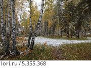 Первые заморозки. Стоковое фото, фотограф Виталий Горелов / Фотобанк Лори