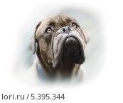 Векторный портрет собаки породы бордоский дог. Стоковая иллюстрация, иллюстратор Сергей Емельянов / Фотобанк Лори