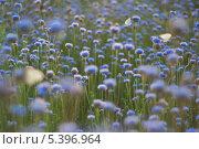 Луг с бабочками. Стоковое фото, фотограф Сергей Юшинский / Фотобанк Лори