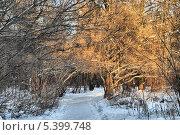 Аллея в лесу, Лосиный остров, район Гольяново, Москва (2013 год). Редакционное фото, фотограф lana1501 / Фотобанк Лори