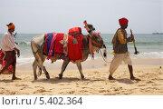 Купить «Наряженный буйвол и индусы идут по пляжу. Индия. Гоа», эксклюзивное фото № 5402364, снято 18 апреля 2012 г. (c) Яна Королёва / Фотобанк Лори