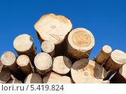 Купить «Сосновые бревна на фоне голубого неба», эксклюзивное фото № 5419824, снято 21 апреля 2013 г. (c) Елена Коромыслова / Фотобанк Лори