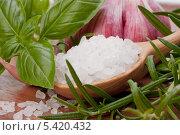 Пряные травы, чеснок и ложка соли. Стоковое фото, фотограф Natalja Stotika / Фотобанк Лори