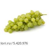 Купить «Гроздья винограда на белом фоне», фото № 5420976, снято 11 июля 2011 г. (c) Natalja Stotika / Фотобанк Лори