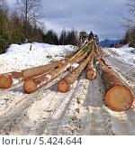 Купить «Заготовка древесины», фото № 5424644, снято 22 февраля 2012 г. (c) Швадчак Василий / Фотобанк Лори