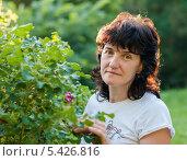 Купить «Симпатичная женщина возле куста шиповника при закатном солнце», эксклюзивное фото № 5426816, снято 27 июня 2013 г. (c) Игорь Низов / Фотобанк Лори