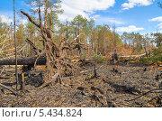 Купить «Лес после пожара», фото № 5434824, снято 3 августа 2012 г. (c) Икан Леонид / Фотобанк Лори