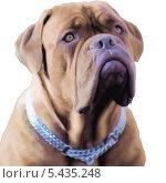 Портрет собаки на белом, иллюстрация. Стоковая иллюстрация, иллюстратор Сергей Емельянов / Фотобанк Лори