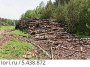 Сложенные бревна после лесного пожара 2010 года в Нижегородской области (2013 год). Стоковое фото, фотограф Алёшина Оксана / Фотобанк Лори