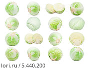 Купить «Набор белокочанной капусты на белом фоне», фото № 5440200, снято 27 июня 2019 г. (c) Алексей Попов / Фотобанк Лори