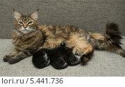 Кошка кормит своих котят молоком. Стоковое фото, фотограф Бутинова Елена / Фотобанк Лори