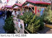 Купить «ГУМ-ярмарка на Красной площади. Елочный базар», эксклюзивное фото № 5442884, снято 29 декабря 2013 г. (c) Илюхина Наталья / Фотобанк Лори