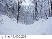 Горка в лесу. Стоковое фото, фотограф Дмитрий Груздов / Фотобанк Лори