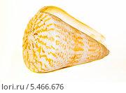 Ракушка. Стоковое фото, фотограф Кухаренко Ефим / Фотобанк Лори