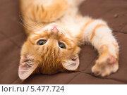 Купить «Рыжий котенок лежит на кровати», фото № 5477724, снято 1 октября 2013 г. (c) Okssi / Фотобанк Лори