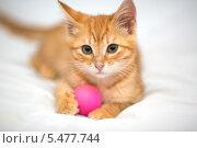 Купить «Рыжий котенок играет с мячом», фото № 5477744, снято 1 октября 2013 г. (c) Okssi / Фотобанк Лори