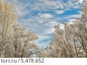 Зимний пейзаж, деревья в инее на фоне неба. Стоковое фото, фотограф Александр Кислицын / Фотобанк Лори