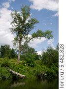 Дерево на реке. Стоковое фото, фотограф Евгений Степанов / Фотобанк Лори