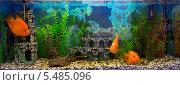 Купить «Аквариум с большими красивыми рыбами и растениями, белый фон», фото № 5485096, снято 14 августа 2013 г. (c) Евгений Ткачёв / Фотобанк Лори