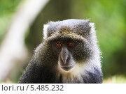 Обезьяна в национальном парке Танзании. Стоковое фото, фотограф Souchko Jegor / Фотобанк Лори
