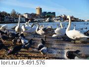 Купить «Зимовка перелетных птиц, Анапа», эксклюзивное фото № 5491576, снято 15 января 2014 г. (c) Игорь Архипов / Фотобанк Лори