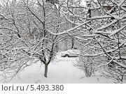 Заснеженные деревья. Стоковое фото, фотограф Левончук Юрий / Фотобанк Лори