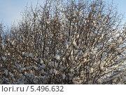 Зимний куст. Стоковое фото, фотограф Павел Карасёв / Фотобанк Лори