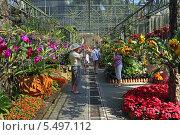 Купить «Тропический парк Нонг Нуч (англ. Nong Nooch Tropical Garden). Туристы фотографируются в оранжерее орхидей», фото № 5497112, снято 27 декабря 2013 г. (c) Григорий Писоцкий / Фотобанк Лори