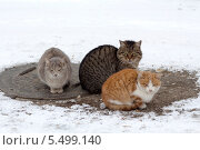 Бездомные кошки. Стоковое фото, фотограф Кудабаев Руслан / Фотобанк Лори