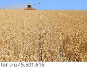 Купить «Уборка зерновых комбайном», фото № 5501616, снято 7 августа 2013 г. (c) Швадчак Василий / Фотобанк Лори