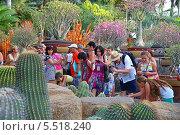 Купить «Тропический парк Нонг Нуч (англ. Nong Nooch Tropical Garden). Туристы фотографируют растения», фото № 5518240, снято 27 декабря 2013 г. (c) Григорий Писоцкий / Фотобанк Лори