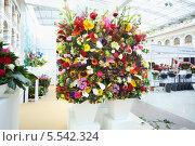 Купить «Два больших букета на XIX Международной выставке цветов в Гостином дворе, 4 сентября 2012 года в Москве, Россия», фото № 5542324, снято 4 сентября 2012 г. (c) Losevsky Pavel / Фотобанк Лори