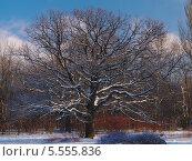 Зима в парке. Стоковое фото, фотограф Сергей Хаменок / Фотобанк Лори