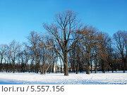 Старые деревья в зимнем парке. Стоковое фото, фотограф Марина Валентиновна Фор / Фотобанк Лори