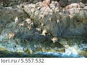 Купить «Обезьяны на скалах острова Ко Чанг в Таиланде», фото № 5557532, снято 20 ноября 2012 г. (c) Игорь Струков / Фотобанк Лори