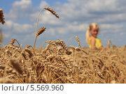 Пшеничное поле на фоне голубого неба и маленькой девочки. Стоковое фото, фотограф Tanya Lomakivska / Фотобанк Лори