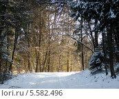 Зимний лес. Стоковое фото, фотограф Качанов Владимир / Фотобанк Лори