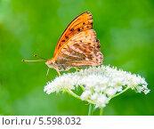 Оранжевая бабочка монарх на цветке. Стоковое фото, фотограф Opra / Фотобанк Лори