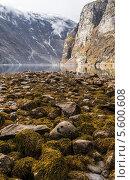 Купить «Каменистое дно фьорда с водорослями в период отлива. Норвегия», фото № 5600608, снято 6 мая 2013 г. (c) Андрей Андронов / Фотобанк Лори