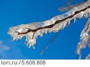Купить «Обледенелая ветка», фото № 5608808, снято 7 января 2011 г. (c) Алексей Попов / Фотобанк Лори