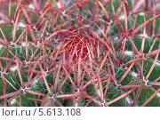 Купить «Колючки кактуса макро», фото № 5613108, снято 21 февраля 2014 г. (c) Наталья Волкова / Фотобанк Лори