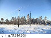 Купить «Энергетический пейзаж. Зима. Строительство высоковольтной воздушной линии электропередач на месторождение в Западной Сибири», эксклюзивное фото № 5616608, снято 4 ноября 2012 г. (c) Валерий Акулич / Фотобанк Лори