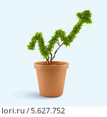 Купить «Концепция роста. Комнатное растение в виде стрелки вверх на голубом фоне», фото № 5627752, снято 21 октября 2018 г. (c) Sergey Nivens / Фотобанк Лори