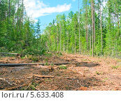 Вырубка просеки в лесу. Стоковое фото, фотограф Opra / Фотобанк Лори