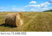 Купить «Урожай», фото № 5648092, снято 18 июля 2013 г. (c) Валерий Смирнов / Фотобанк Лори