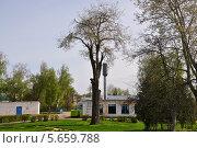 Купить «Дерево», фото № 5659788, снято 14 мая 2011 г. (c) Елена Голицына / Фотобанк Лори