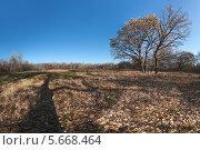 Купить «Осенняя поляна», фото № 5668464, снято 20 октября 2018 г. (c) Забалуев Игорь Анатолич / Фотобанк Лори