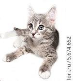 Серый котёнок на белом фоне. Стоковое фото, фотограф Виктор Шушурин / Фотобанк Лори