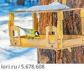 Купить «Большая синица на кормушке», эксклюзивное фото № 5678608, снято 7 марта 2014 г. (c) Евгений Мухортов / Фотобанк Лори